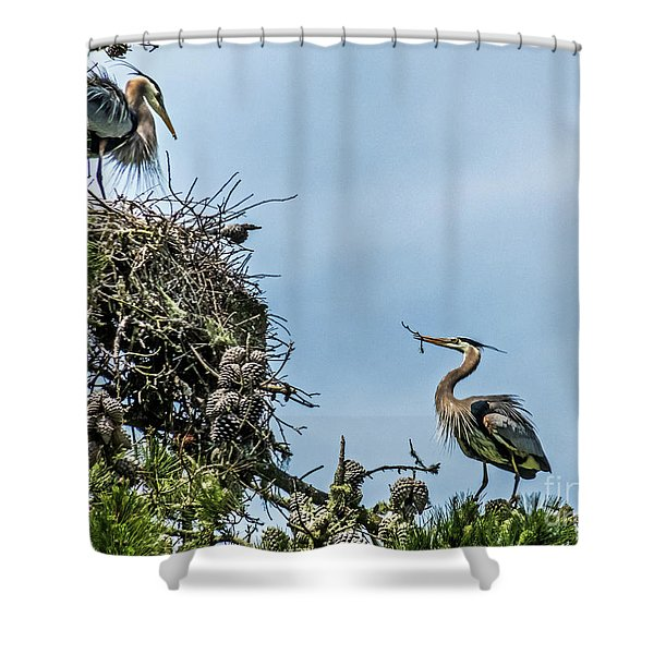 Courting Herons 1 Shower Curtain