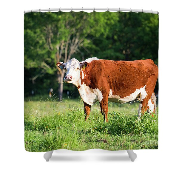 Cow #1 Shower Curtain