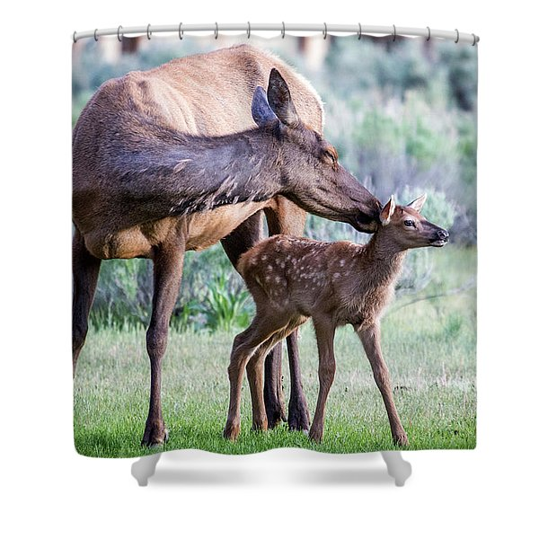 Cow And Calf Elk Shower Curtain