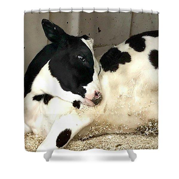 Cow Cutie Shower Curtain