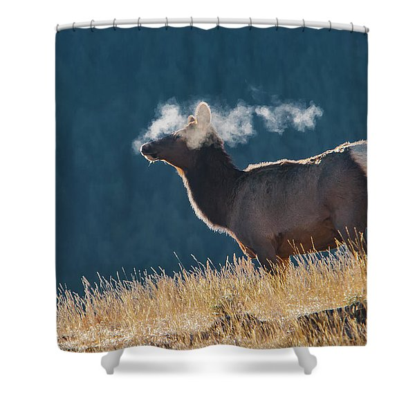 Cow Elk With Steamy Breath Shower Curtain