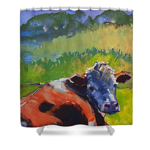 Cow Lying Down On A Sunny Day Shower Curtain
