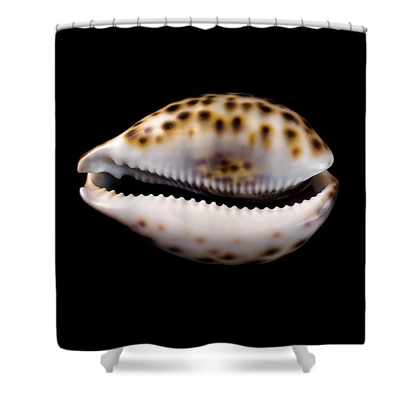 Cowry Sea Shell Shower Curtain