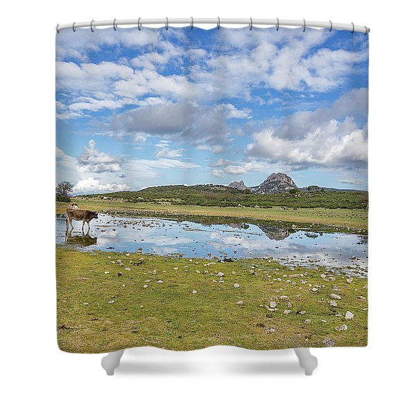 Reflected Cows  Shower Curtain