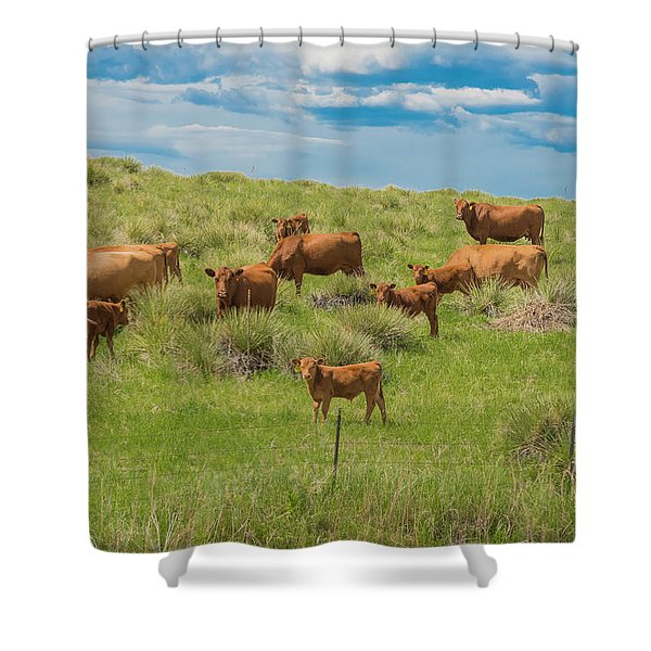 Cows In Field 1 Shower Curtain