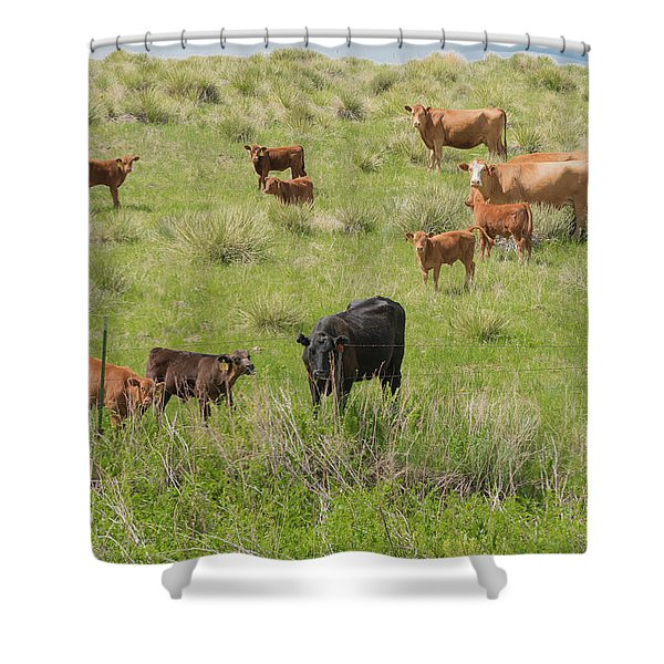Cows In Field 2 Shower Curtain