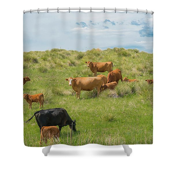 Cows In Field 3 Shower Curtain
