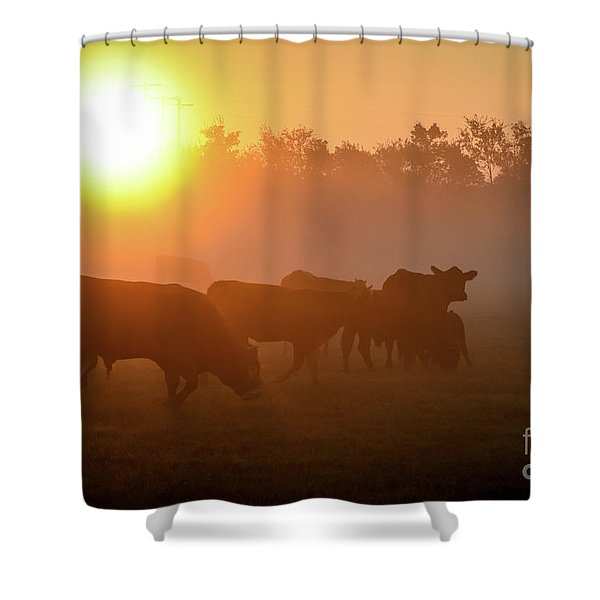 Cows In The Sunrise Mist Shower Curtain