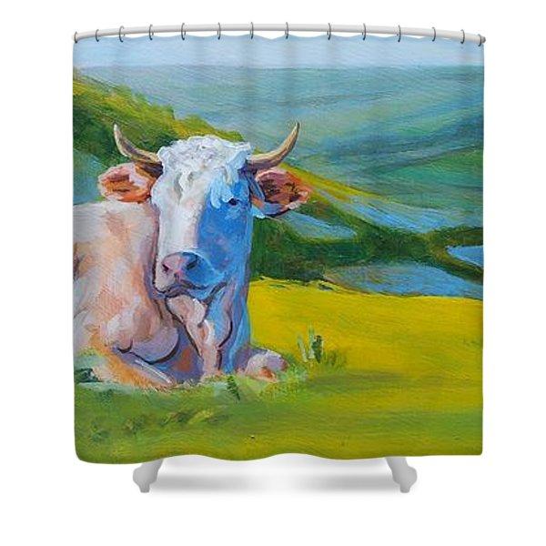 Cows Lying Down In Devon Hills Shower Curtain