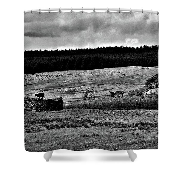Cows On A Wall Shower Curtain