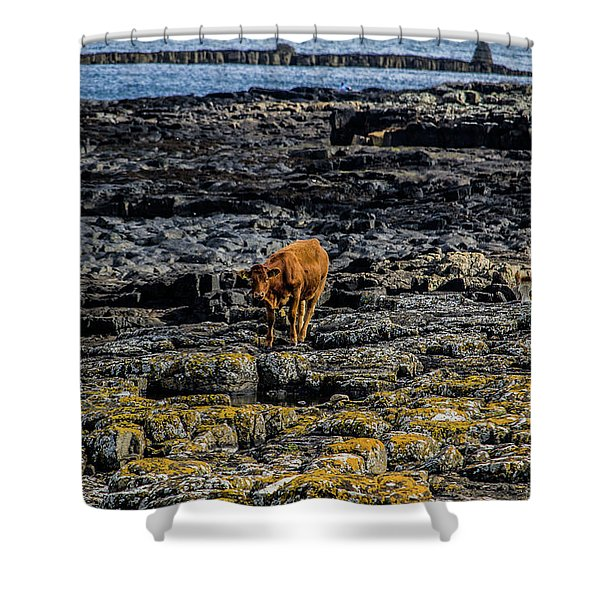 Cows On The Rocks Shower Curtain
