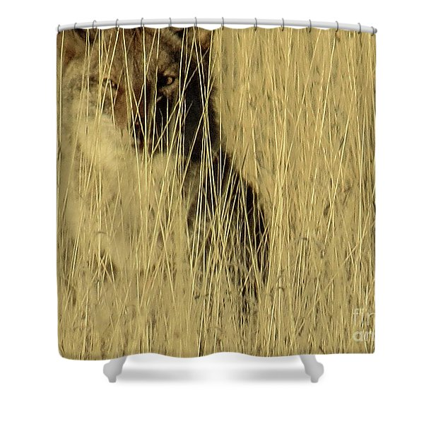 Coyote 3 Shower Curtain