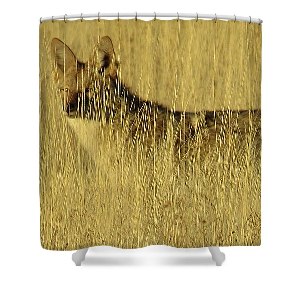 Coyote 4 Shower Curtain