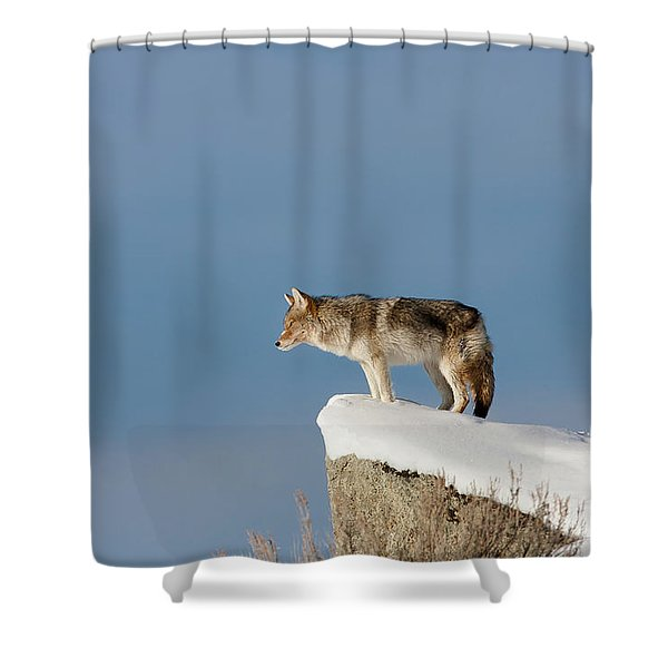 Coyote At Overlook Shower Curtain
