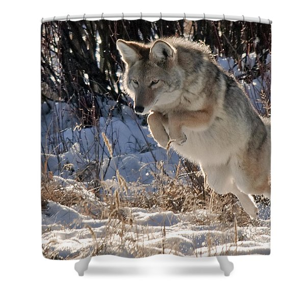 Coyote In Mid Jump Shower Curtain