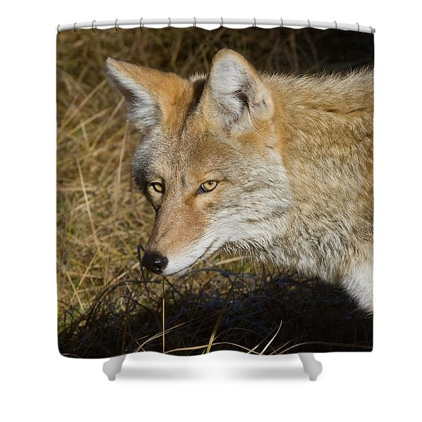 Coyote In The Wild Shower Curtain