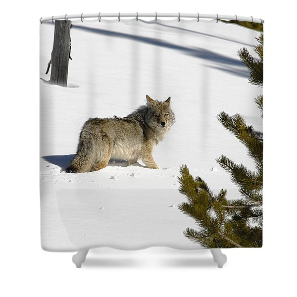 Coyote In Winter Shower Curtain