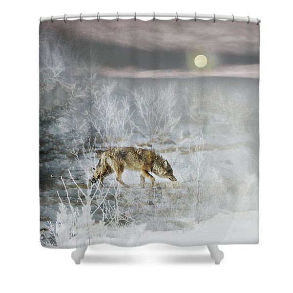 Coyote On A Winter Night Shower Curtain