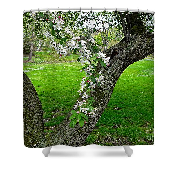 Crabapple Blossoms On A Rainy Spring Day Shower Curtain