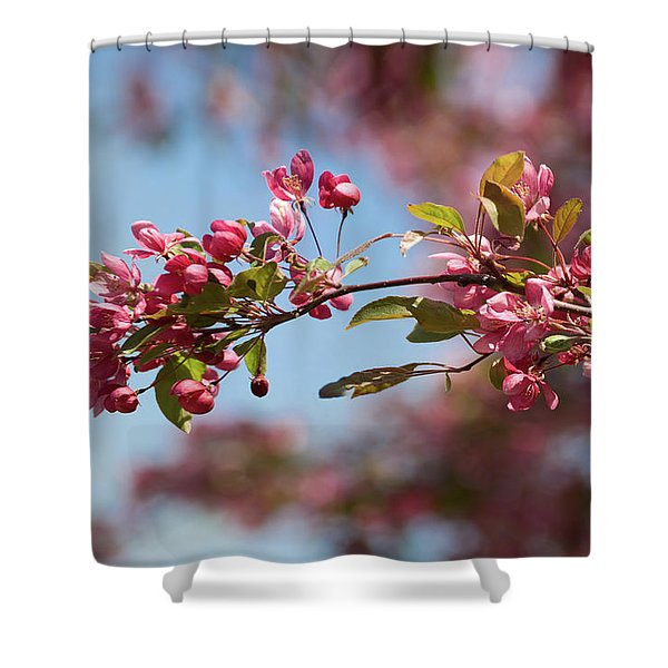 Crabapple In Spring Section 1 Of 4 Shower Curtain