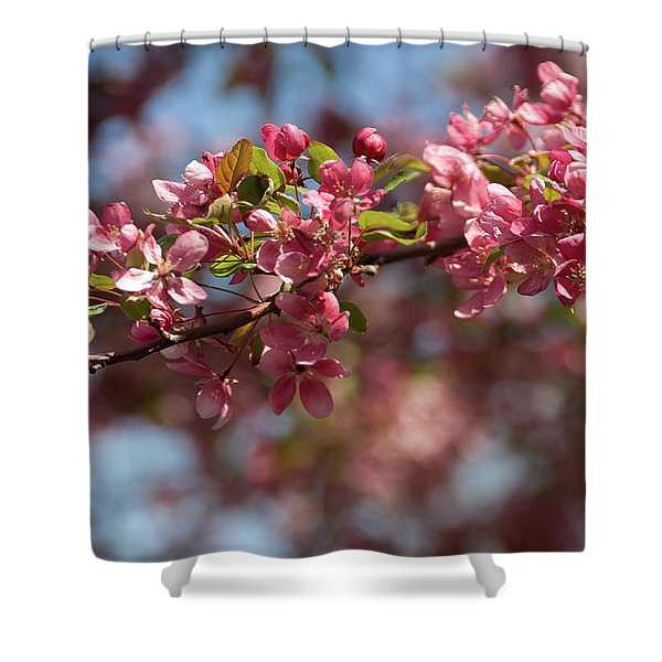 Crabapple In Spring Section 2 Of 4 Shower Curtain