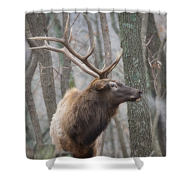 Shower Curtain featuring the photograph Wild Eyed by Andrea Silies