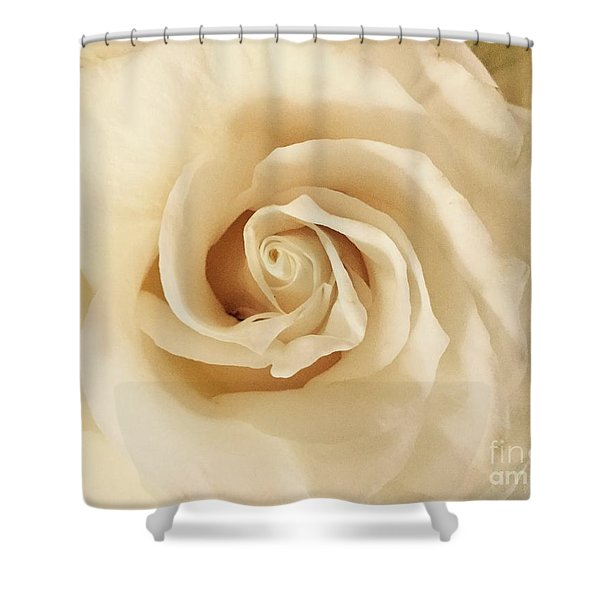 Creamy Rose Shower Curtain
