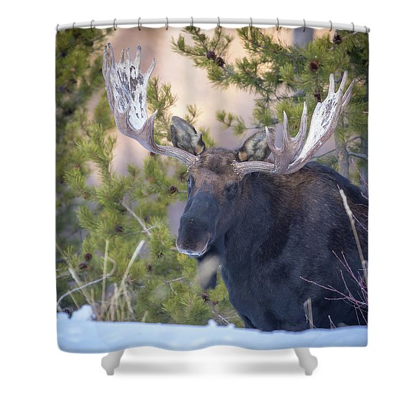 Creekside  Shower Curtain
