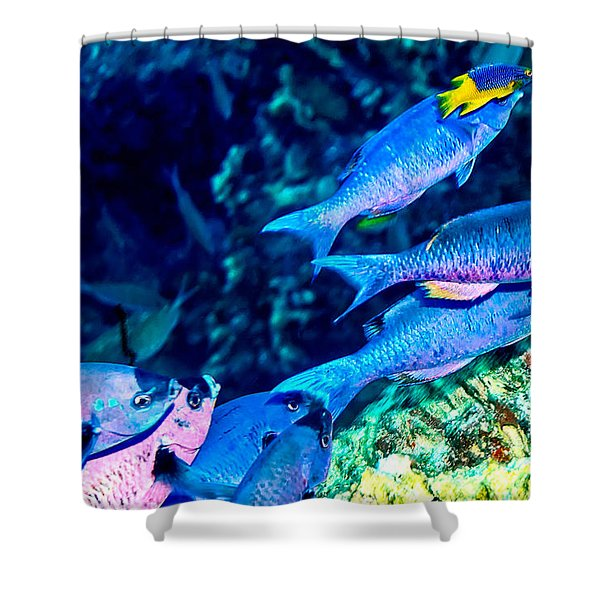 Shower Curtain featuring the photograph Creole Wrasse And Little Spanish Hogfish by Perla Copernik