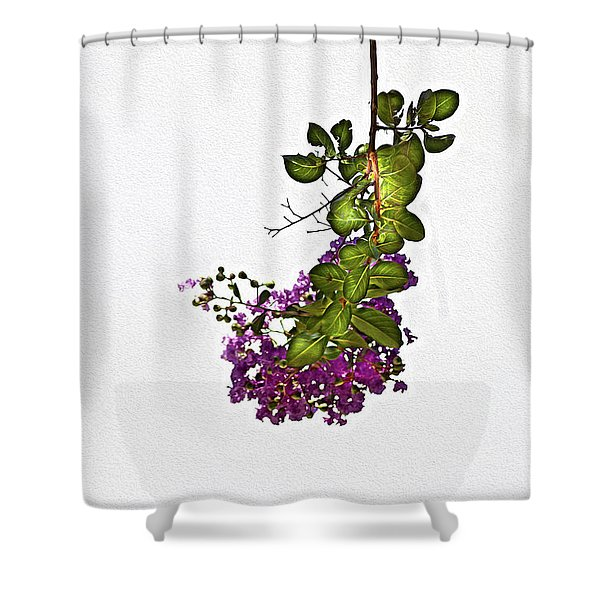 Crepe Myrtle In Oil Shower Curtain