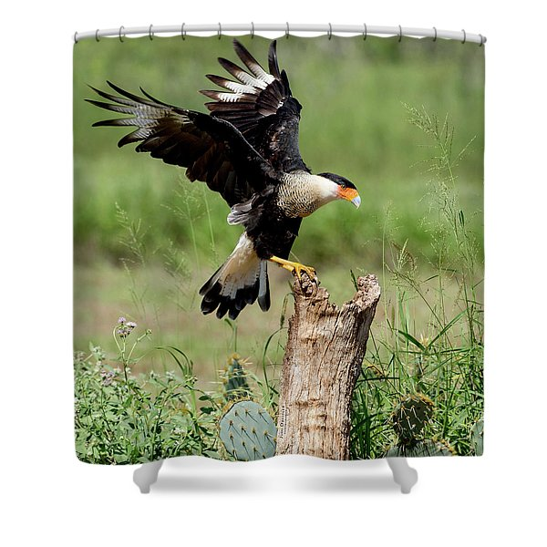 Crested Caracara Landing Shower Curtain