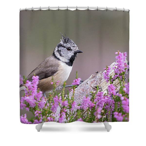 Crested Tit In Heather Shower Curtain