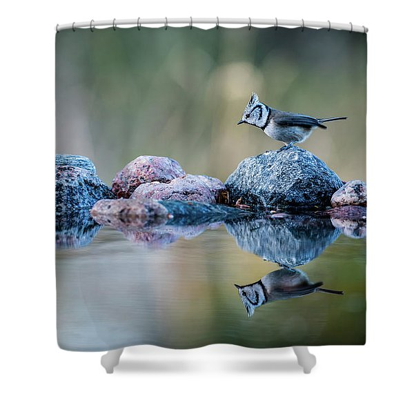 Crested Tit's Reflection Shower Curtain