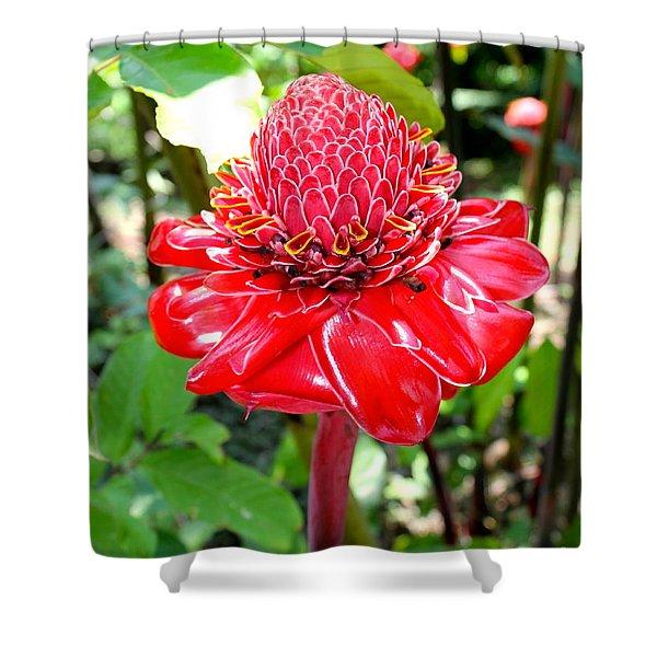 Crimson Bloom Shower Curtain