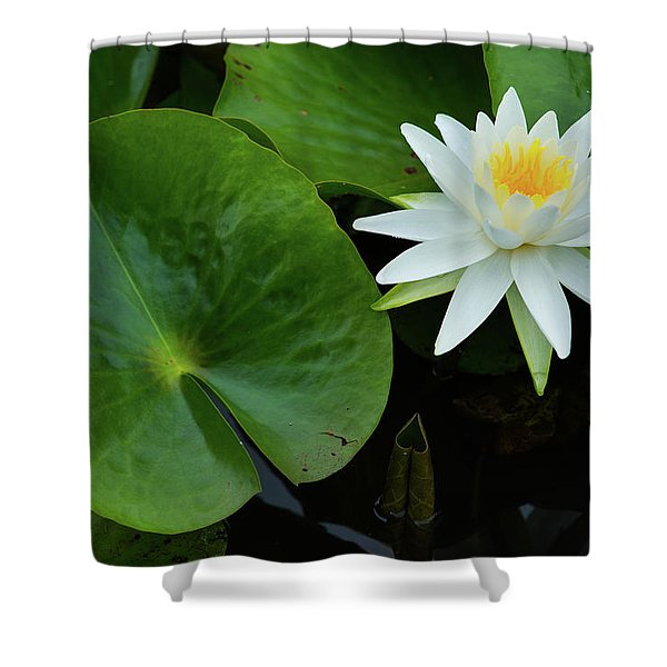 Crisp White And Yellow Lily Shower Curtain