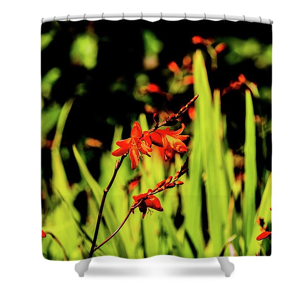 Crocosmia Shower Curtain
