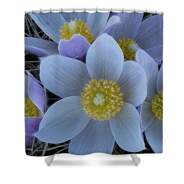 Crocus Blossoms Shower Curtain
