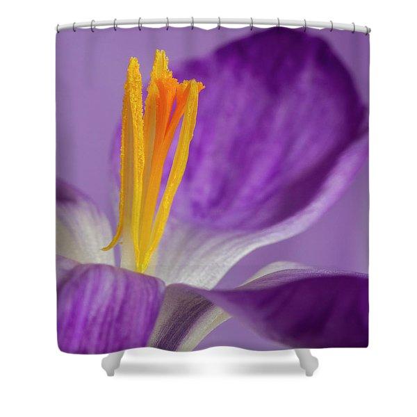 Crocus Stamens  Shower Curtain