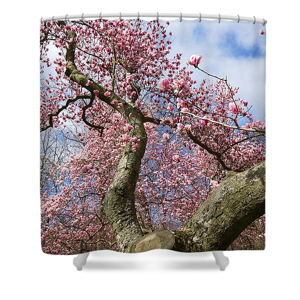 Crooked Magnolia Shower Curtain