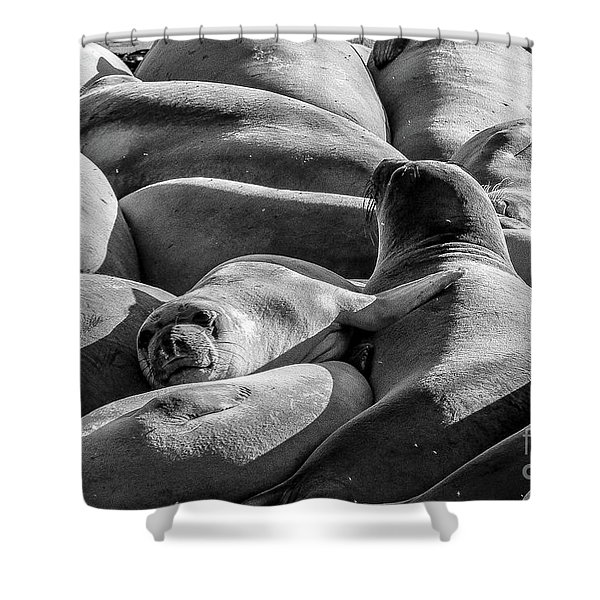Cuddle Puddle Shower Curtain