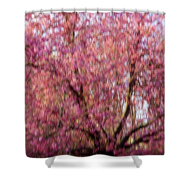 Columnar Sargent Cherry 2 Shower Curtain