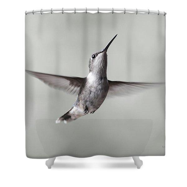 Cumberland Gap Hummingbird Precious And Proud Shower Curtain