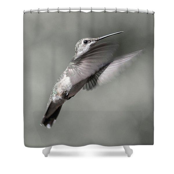 Cumberland Gap Hummingbird Small But Mighty Shower Curtain