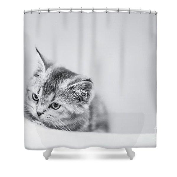 Curiosity Shower Curtain