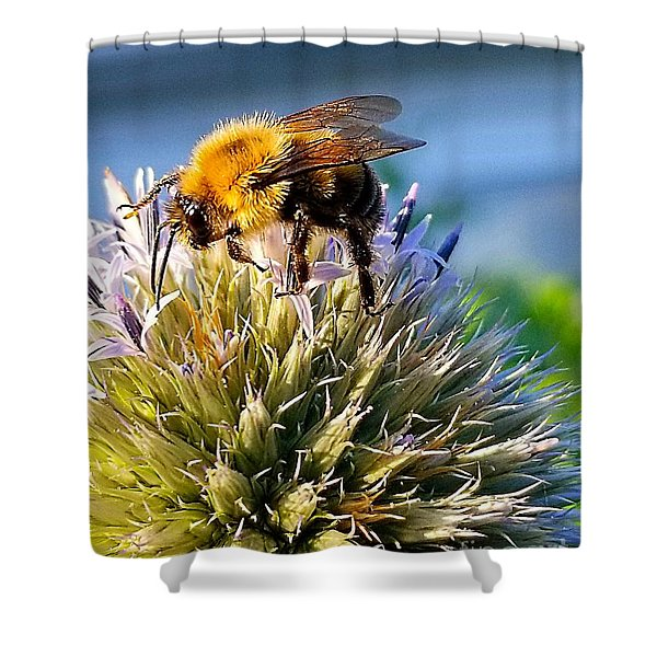 Curious Bee Shower Curtain