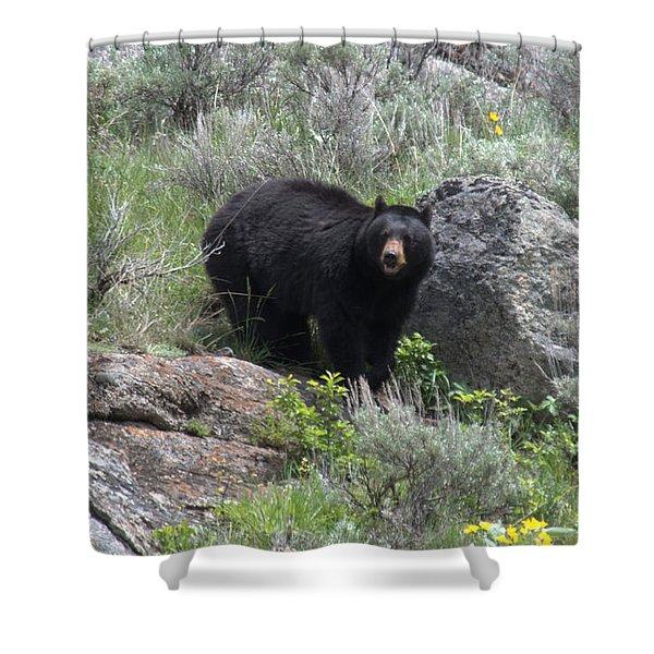 Curious Black Bear Shower Curtain