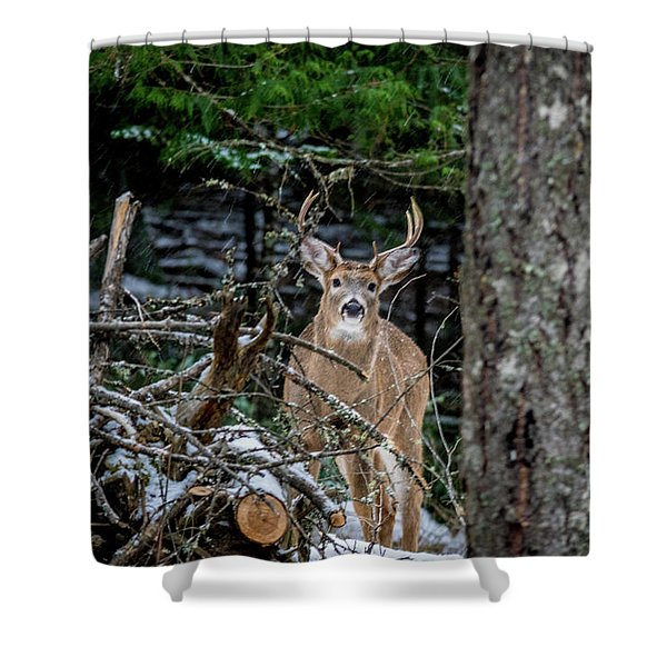 Shower Curtain featuring the photograph Curious Buck by Lester Plank