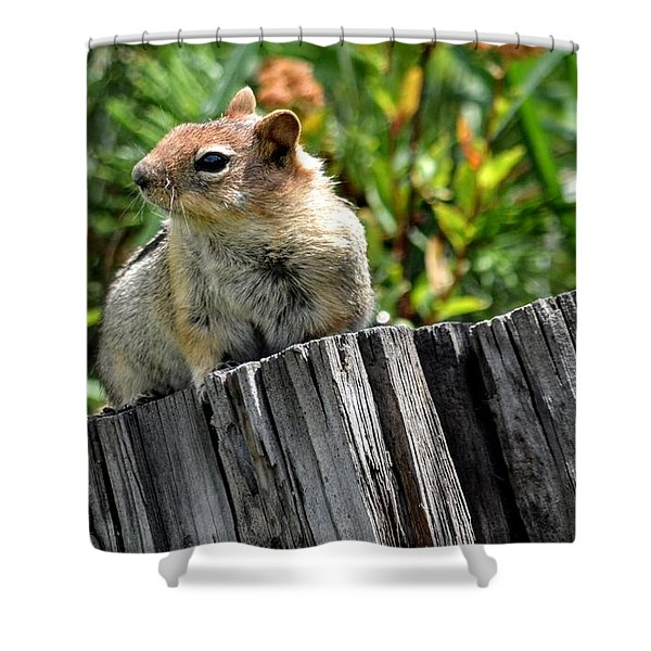 Curious Chipmunk Shower Curtain