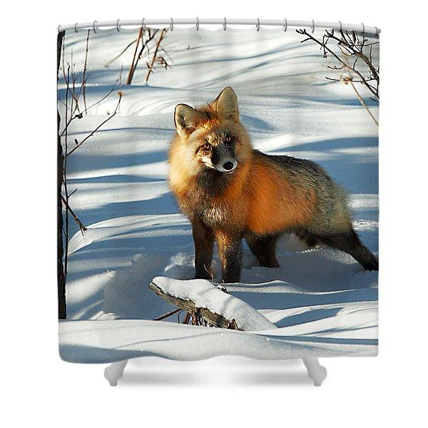 Curious Fox Shower Curtain