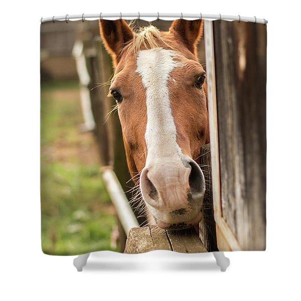 Curious Horse Shower Curtain